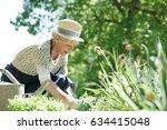 senior woman gardening on... | Shutterstock . vector #634415048