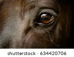 Stock photo eye of a black horse 634420706