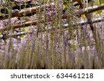 wisterias in yamanashi  japan | Shutterstock . vector #634461218