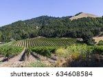 Vineyard Outside Santa Rosa...