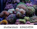 euphyllia lps garden corals | Shutterstock . vector #634614554