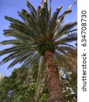 palm trees | Shutterstock . vector #634708730