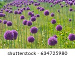 Purple And Violet Flowers Of...