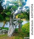 ebony tree in lumpini park ... | Shutterstock . vector #634733456