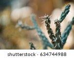 cactus | Shutterstock . vector #634744988