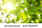 sunlight with tropical tree... | Shutterstock . vector #634784099