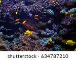tropical fish on a coral reef | Shutterstock . vector #634787210