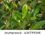 jackfruit tree    Shutterstock . vector #634799348
