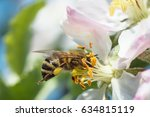Bee Pollinating Apple Blossoms...
