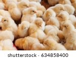 large group of newly hatched... | Shutterstock . vector #634858400