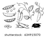 pea hand drawn vector... | Shutterstock .eps vector #634915070