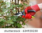 girl cuts or trims the bush... | Shutterstock . vector #634920230