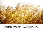 reed   Shutterstock . vector #634946093