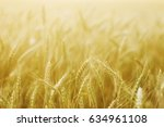 ears of wheat | Shutterstock . vector #634961108