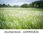 Wild Green Grass Background ...