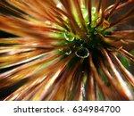 flower after rain with... | Shutterstock . vector #634984700