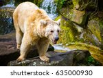 polar bear on rocks | Shutterstock . vector #635000930