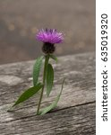 a single scottish thistle... | Shutterstock . vector #635019320