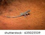 A Dragon Lizard Endemic Of...