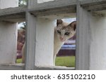 cat in lumpini park  | Shutterstock . vector #635102210