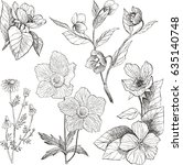 vintage botanical illustration... | Shutterstock .eps vector #635140748