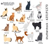 set of cats breeds color flat...   Shutterstock .eps vector #635191370