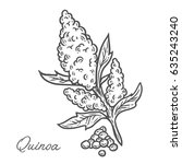 quinoa seed plant  leaf  branch.... | Shutterstock .eps vector #635243240