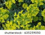 green leaf background for... | Shutterstock . vector #635259050