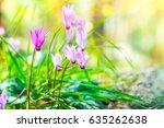 gentle pink wildflowers ...   Shutterstock . vector #635262638
