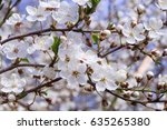 blooming tree | Shutterstock . vector #635265380