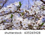 blooming tree | Shutterstock . vector #635265428