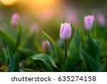 amazing nature spring concept... | Shutterstock . vector #635274158
