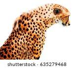 Cheetah Big Wild Cat With...