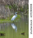 Small photo of American Egret in Minnesota
