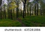 sunrise in spring green forest. ... | Shutterstock . vector #635281886