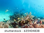 tropical fishes and colorful... | Shutterstock . vector #635404838