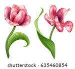 botanical illustration ... | Shutterstock . vector #635460854