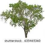 tree on white background | Shutterstock . vector #635465360