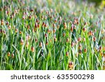 abstract floral background of... | Shutterstock . vector #635500298
