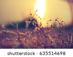 vintage photo of wild flowers... | Shutterstock . vector #635514698