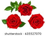rose isolated on the white... | Shutterstock . vector #635527070