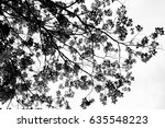 silhouette tree branches and... | Shutterstock . vector #635548223