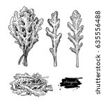 arugula leaf hand drawn vector... | Shutterstock .eps vector #635556488