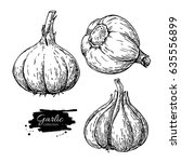 garlic hand drawn vector... | Shutterstock .eps vector #635556899