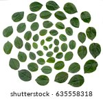 green leaves arranged in spiral ... | Shutterstock . vector #635558318