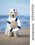golden retriever dog holding a... | Shutterstock . vector #635565530