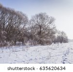 Winter In The Forest. Nature I...