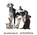 Stock photo assembly of cats and dogs isolated on white 635630426