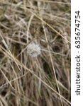 Small photo of Saddleworth Moor plant life