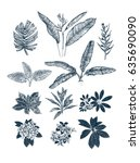 tropical collection. botanical... | Shutterstock .eps vector #635690090